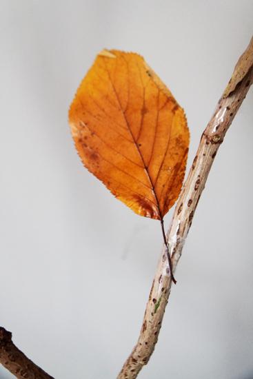 arbre deco automne intérieur