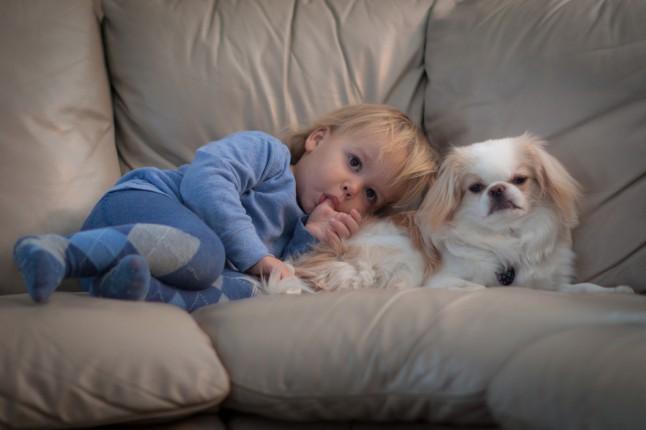 enfant câlin avec son chien