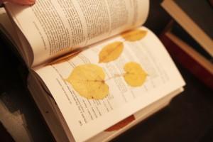 faire sécher des feuilles dans un livre