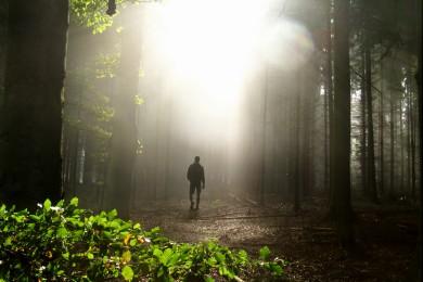 marcher vers la lumière dans la forêt