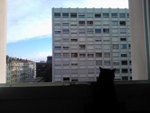 vue sur une barre d'immeubles