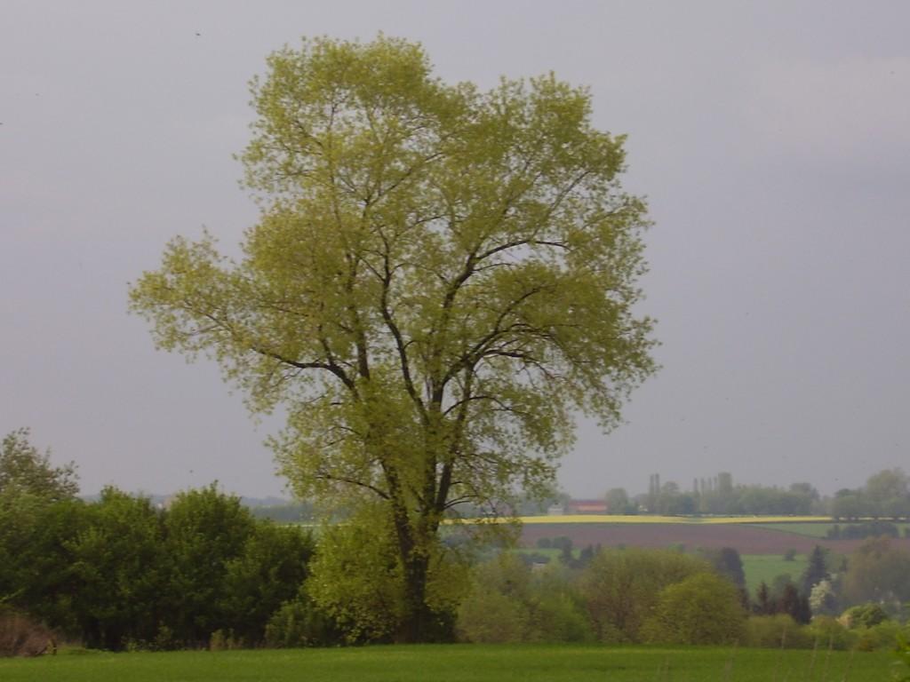 grand arbre dans le paysage