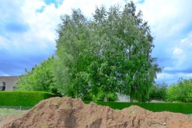 arbre près d'un terrain en construction