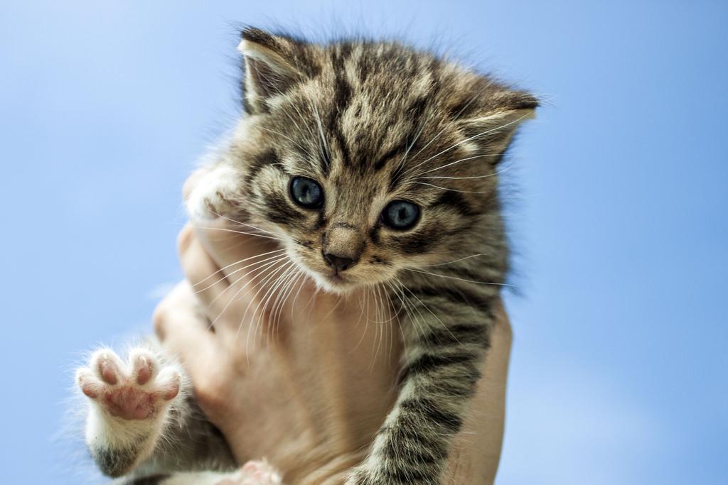 petit chaton mignon