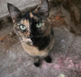 chat couleur moitié moitié