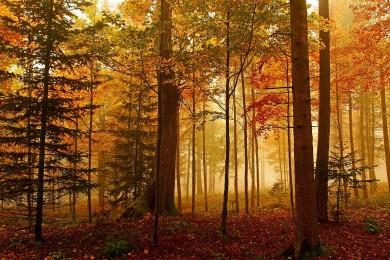 forêt couleurs d'automne brume
