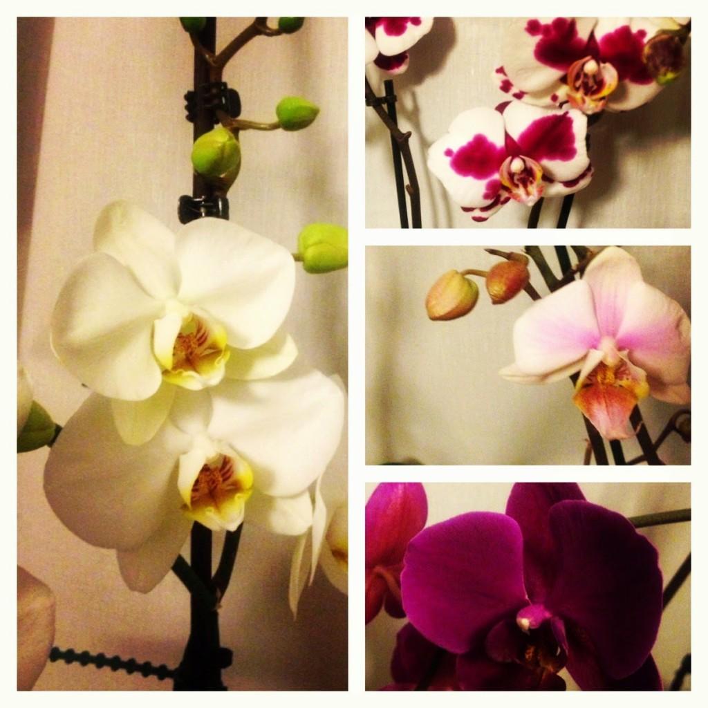 petites astuces pour faire pousser son orchid�e | sous notre