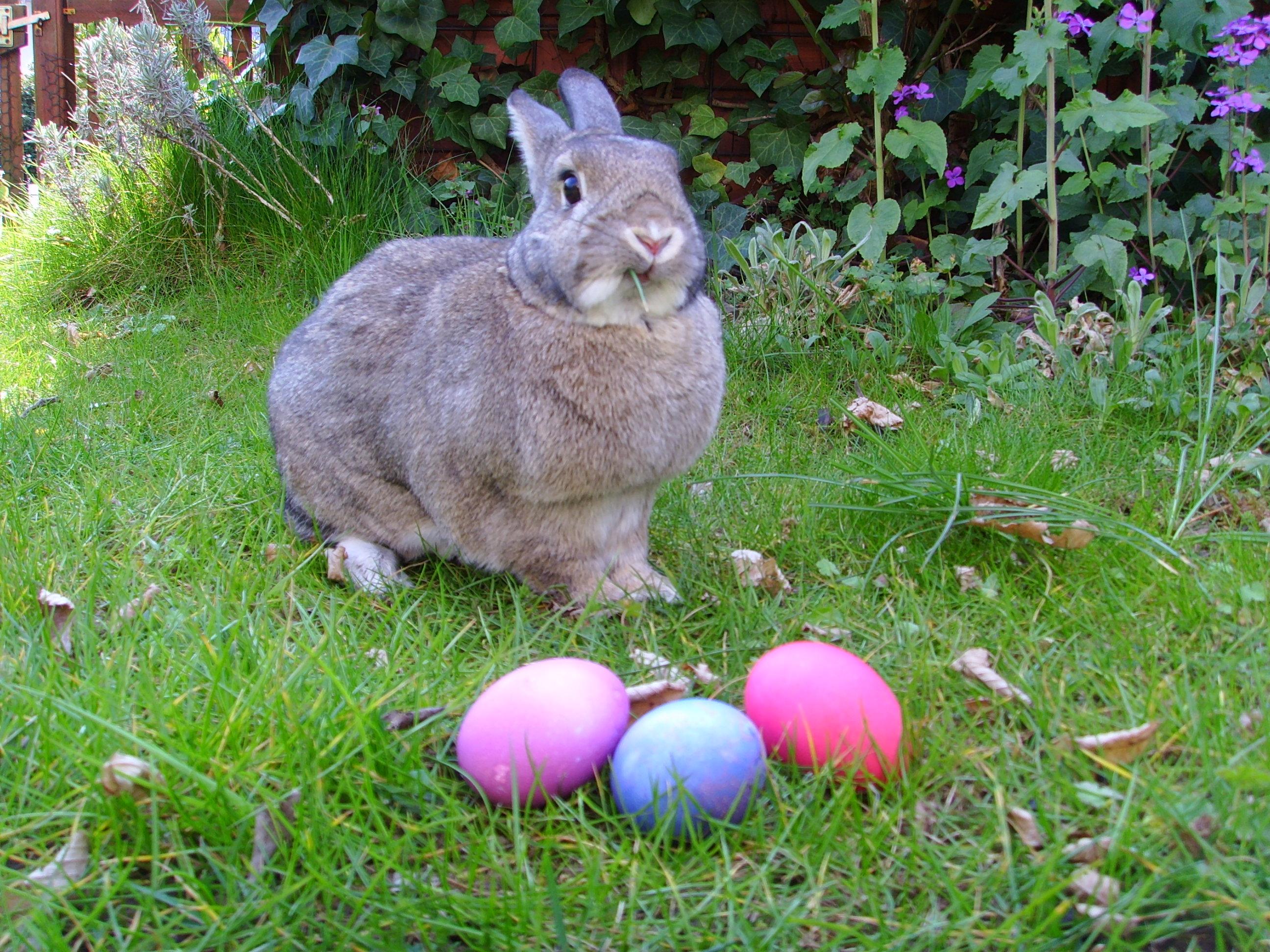 lièvre de Pâques