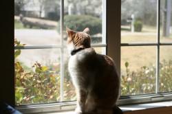 Pourquoi notre chat ne sort jamais