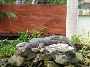 dragon thailande