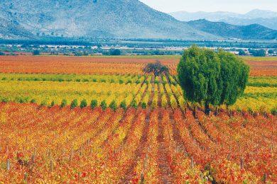 Voyager à l'étranger sur la route du vin