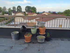 Potager sur balcon : plantations